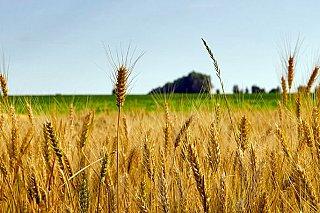 S potravinami to skončí jako s energiemi, varují zemědělci před dopady strategií EU na ochranu klimatu